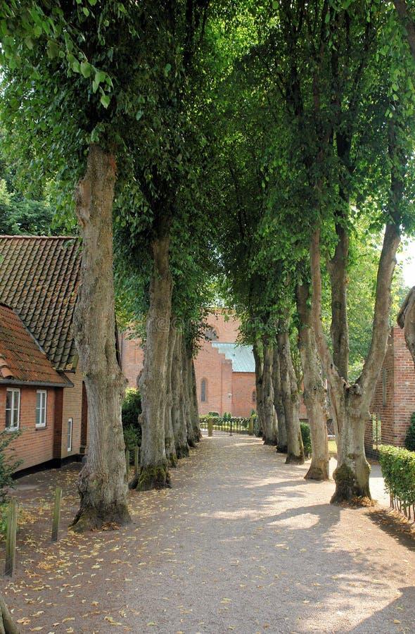 drzewo na spacer zdjęcia royalty free