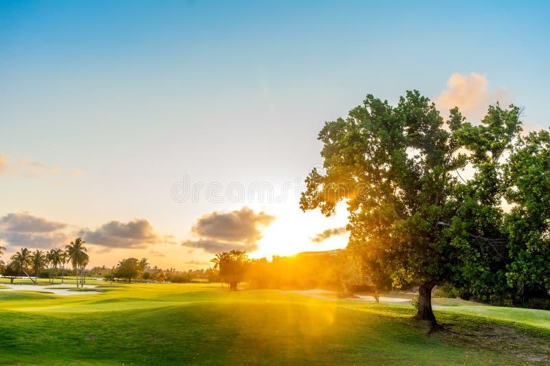 Drzewo na Zielonych wzgórzy zmierzchu tle fotografia stock