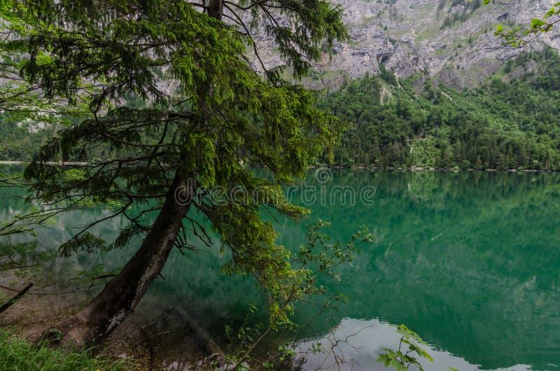 Drzewo nad wodą obrazy stock