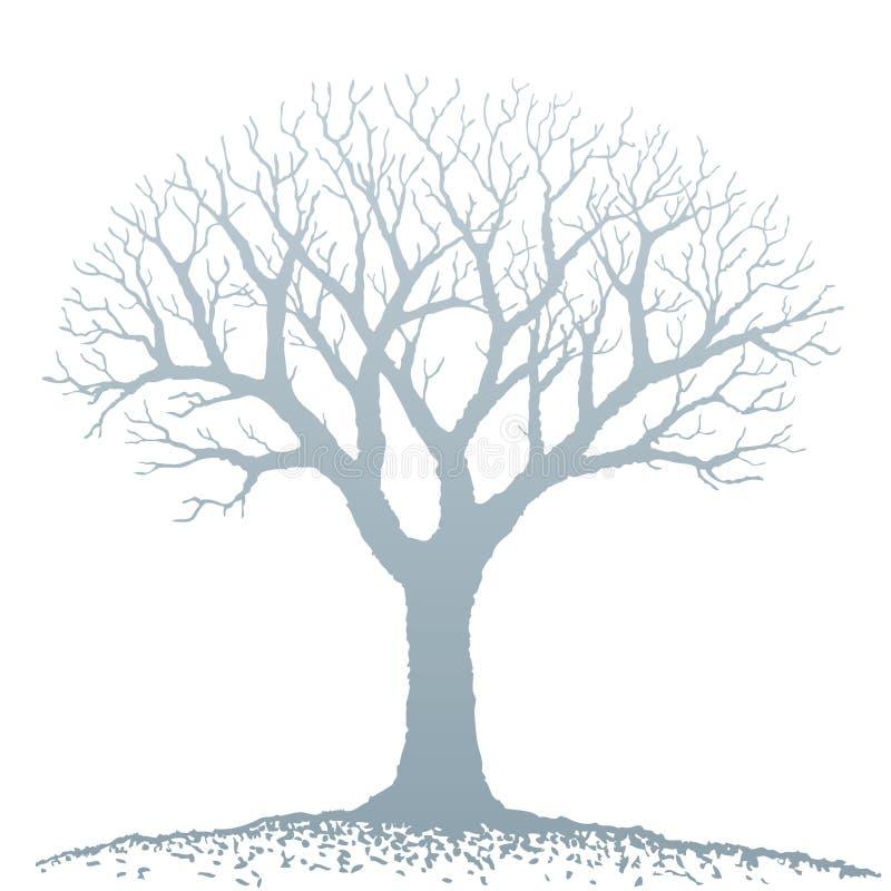 drzewo nagi wektor ilustracji