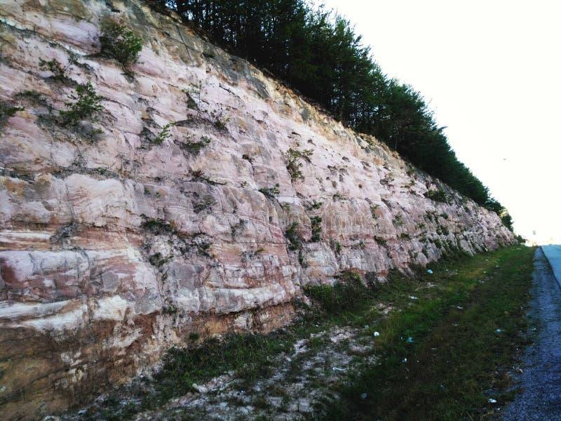 Drzewo nakrywająca skały ściana obraz stock