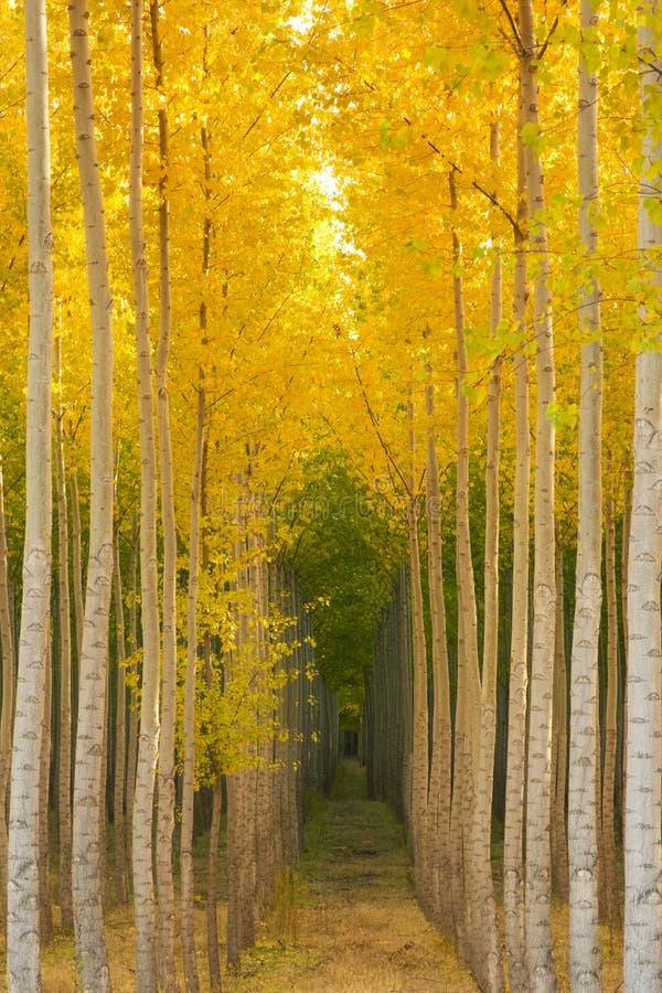 Drzewo Nasycający zdjęcia royalty free