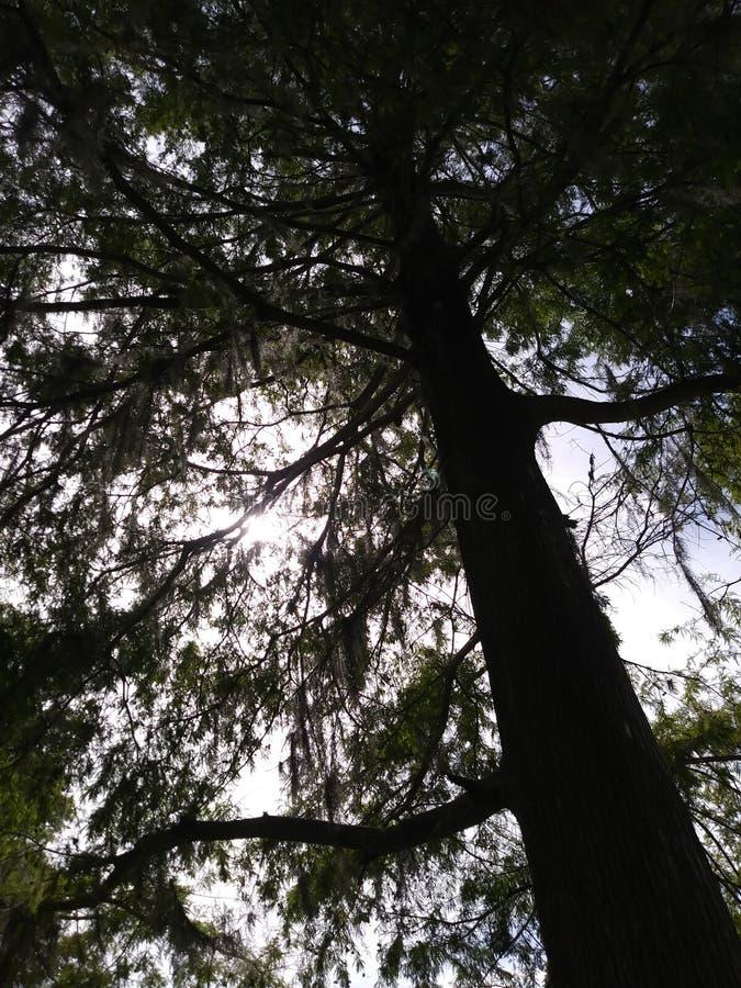 Drzewo natura fotografia royalty free