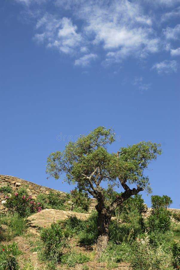 drzewo nieba zdjęcie stock