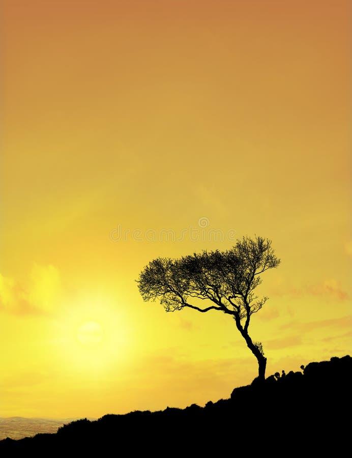 drzewo nieba słońca zdjęcia royalty free