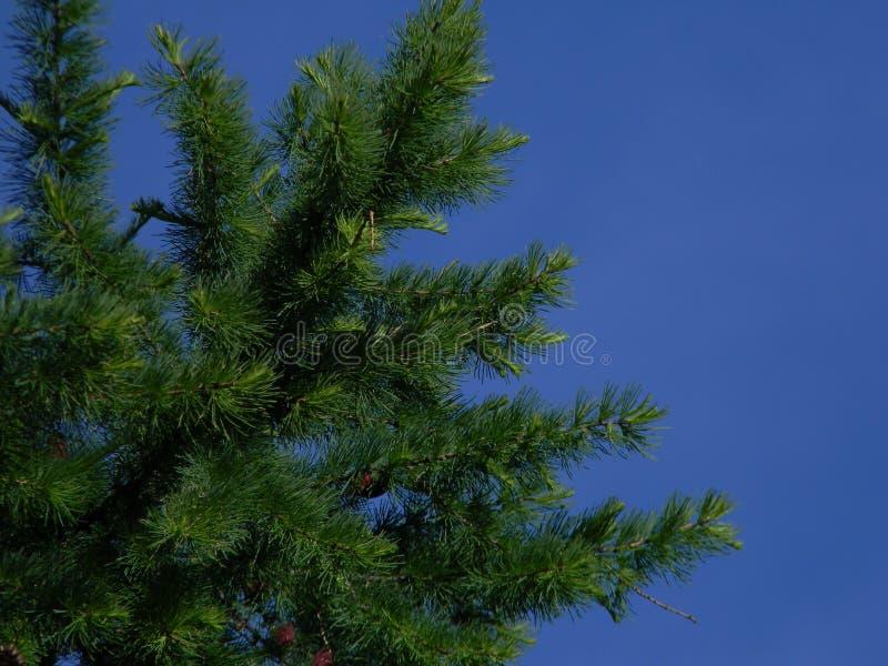 Drzewo & niebo fotografia stock
