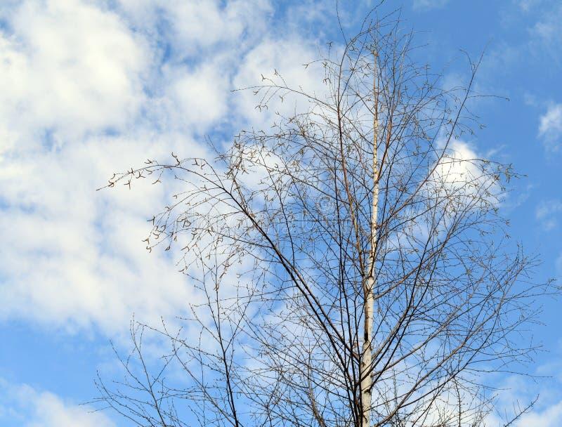 Drzewo, niebo, natura, zima, błękit, drzewa, las, gałąź, gałąź, krajobraz, sezon, chmury, zimno, jesień, śnieg, wiosna, chmura, w zdjęcia stock