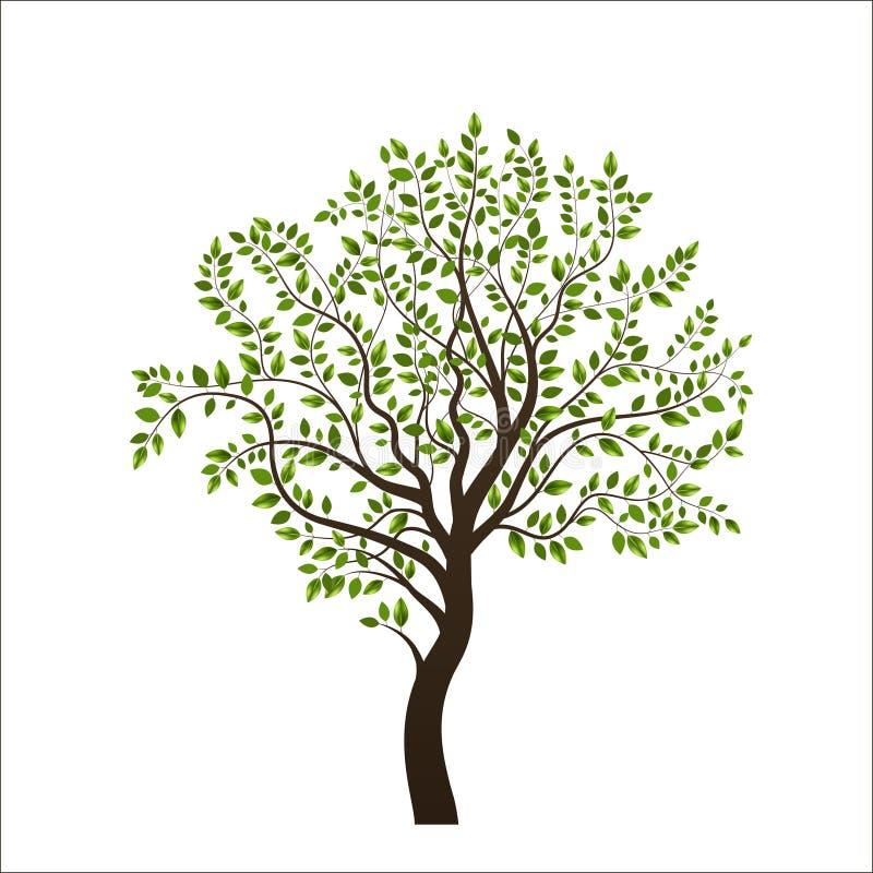 Drzewo nowy obrazy stock