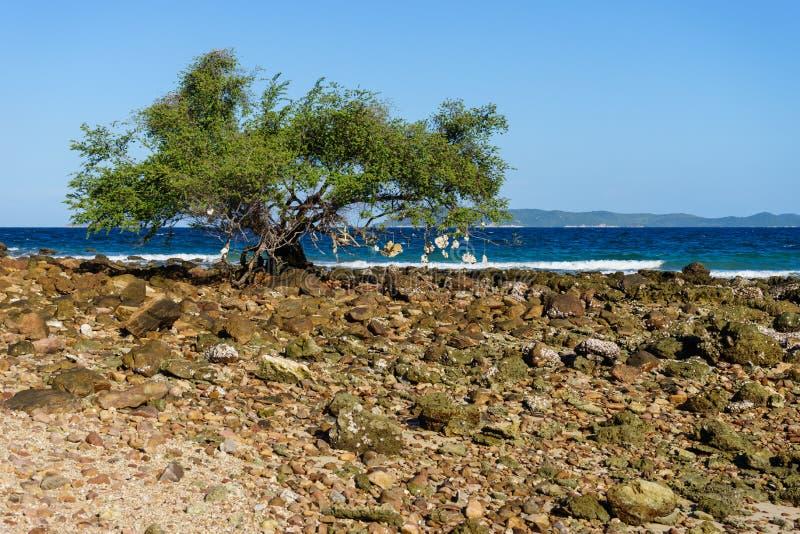 Download Drzewo obok plaży zdjęcie stock. Obraz złożonej z tło - 57669372