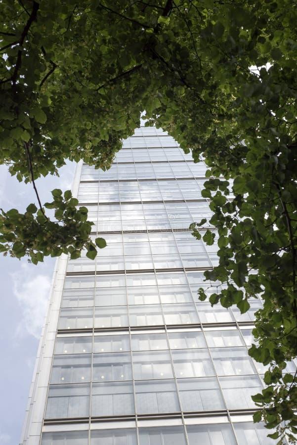 Drzewo obramiający London centrum miasta drapacz chmur zdjęcia stock