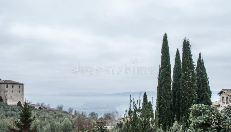 Drzewo od Assisi fotografia stock