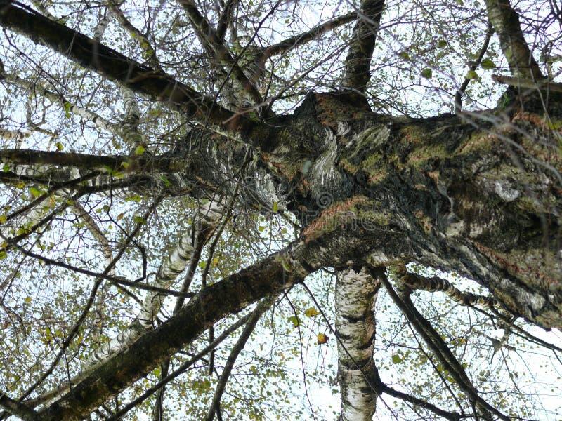 Drzewo od dna obrazy royalty free