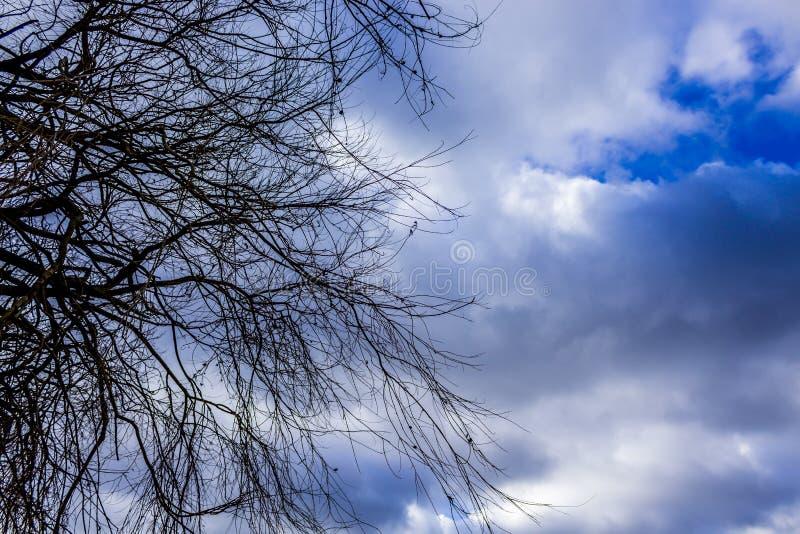 Drzewo odgórna sylwetka w niebie fotografia stock