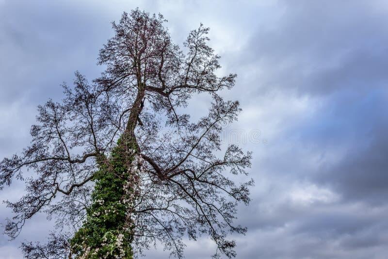 Drzewo odgórna sylwetka z liśćmi i kwiatami zdjęcie stock