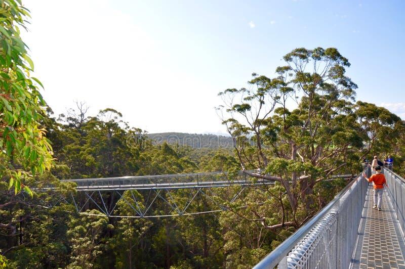 Drzewo Odgórnego spaceru Unikalny Bridżowy projekt: Dani, zachodnia australia zdjęcie royalty free