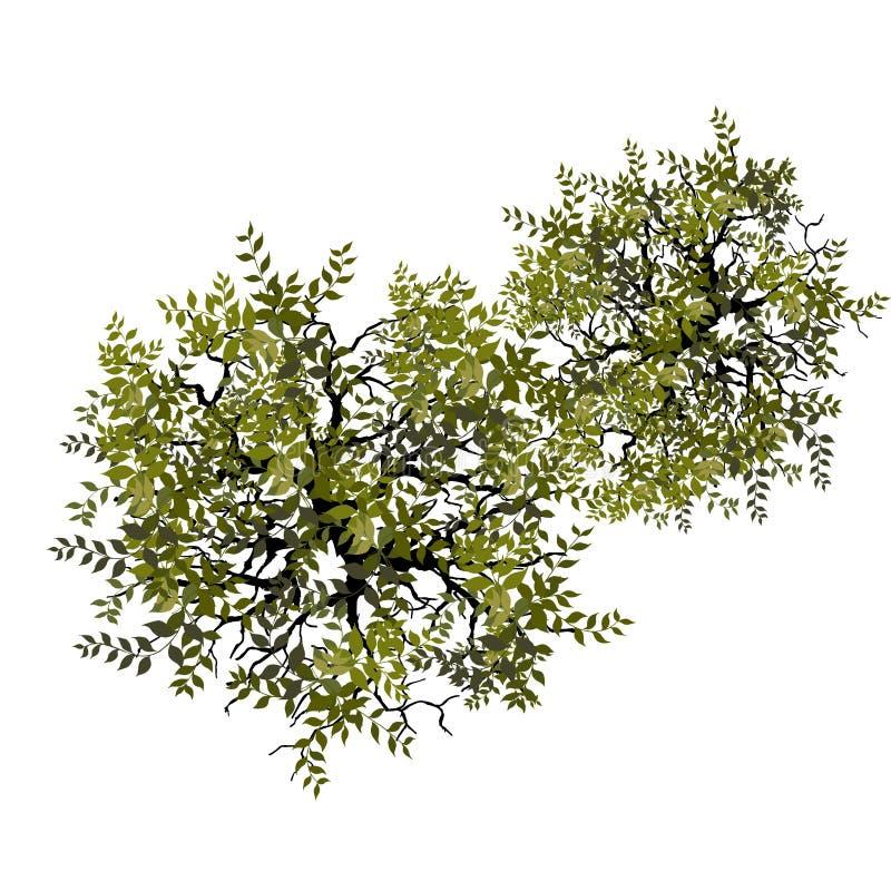 Drzewo odgórny widok dla krajobrazowej wektorowej ilustraci zdjęcie stock