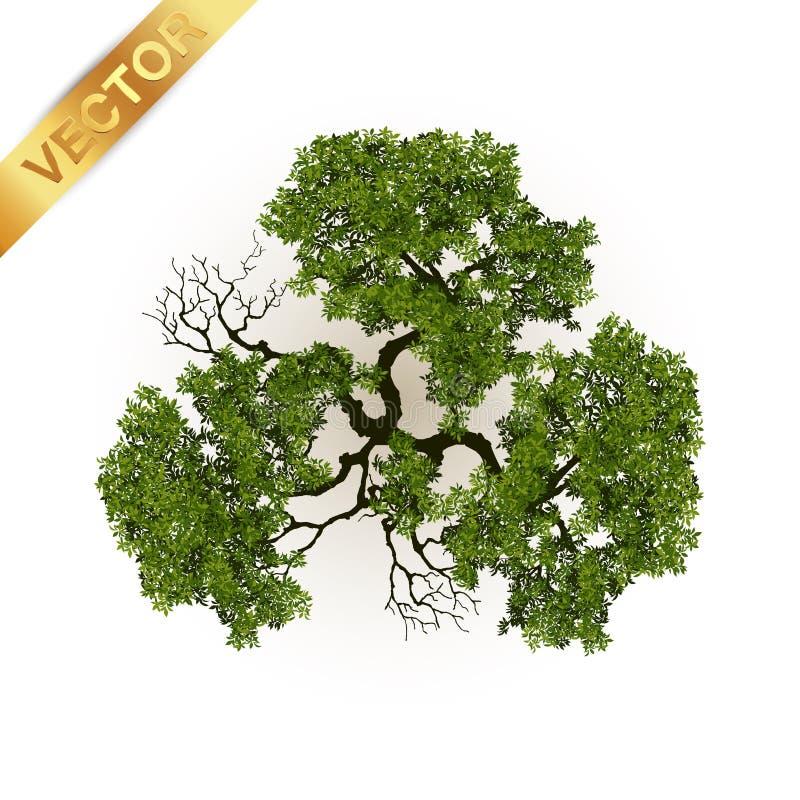 Drzewo odgórny widok dla krajobrazowej wektorowej ilustraci obrazy stock