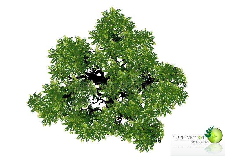 Drzewo odgórny widok dla krajobrazowej wektorowej ilustraci zdjęcia royalty free
