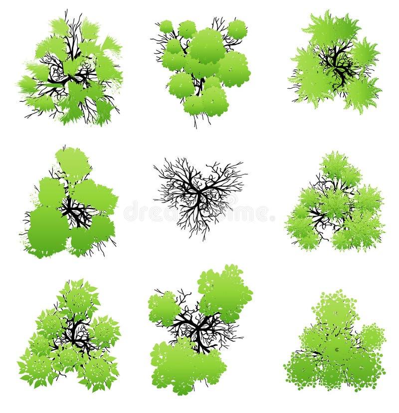 Drzewo odgórny widok dla krajobrazowej wektorowej ilustraci obrazy royalty free