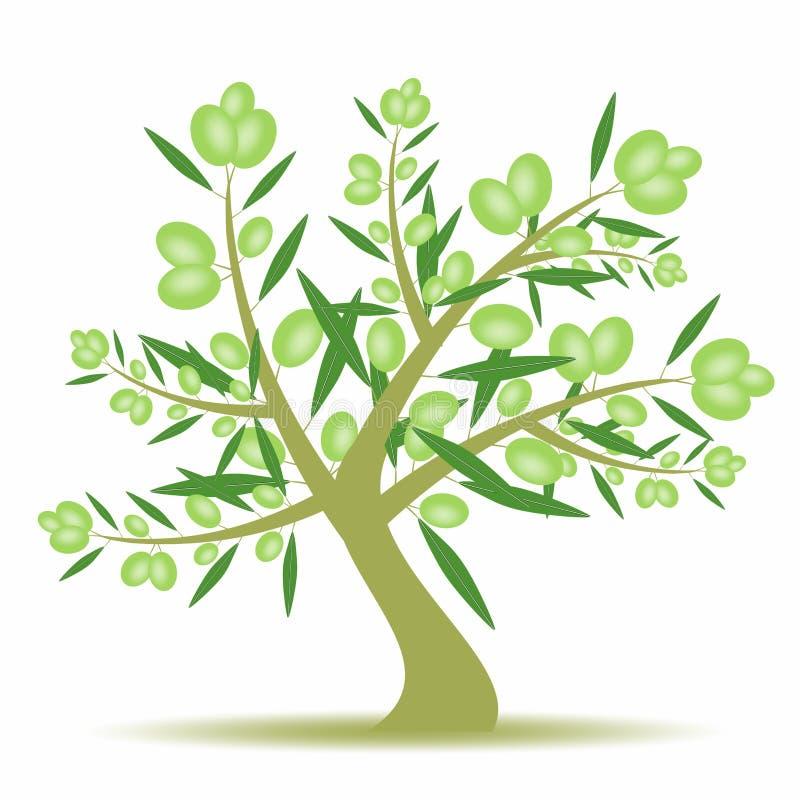 drzewo oliwne ilustracji