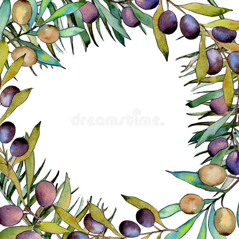 Download Drzewo Oliwne Rama W Akwarela Stylu Ilustracji - Ilustracja złożonej z kwiecisty, decylitr: 106923706