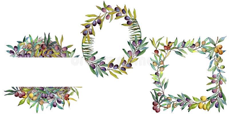 Download Drzewo Oliwne Rama W Akwarela Stylu Ilustracji - Ilustracja złożonej z ulistnienie, flanca: 106923795