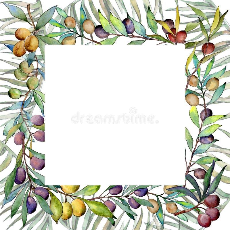 Download Drzewo Oliwne Rama W Akwarela Stylu Ilustracji - Ilustracja złożonej z decylitr, rama: 106923849