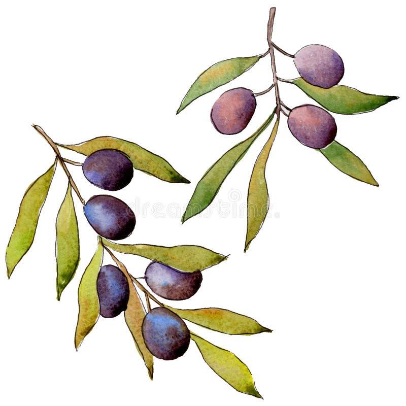 Download Drzewo Oliwne W Akwarela Stylu Odizolowywającym Ilustracji - Ilustracja złożonej z rysujący, sylwetka: 106923386