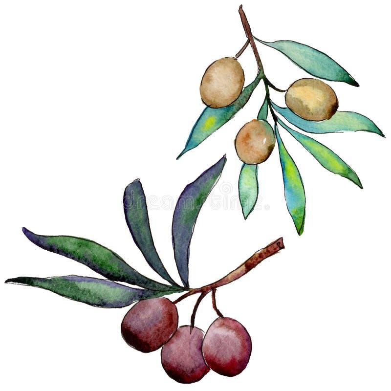 Download Drzewo Oliwne W Akwarela Stylu Odizolowywającym Ilustracji - Ilustracja złożonej z ilustracje, sezonowy: 106923417