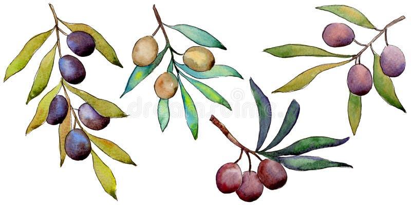 Download Drzewo Oliwne W Akwarela Stylu Odizolowywającym Ilustracji - Ilustracja złożonej z trzon, dekoracje: 106923628