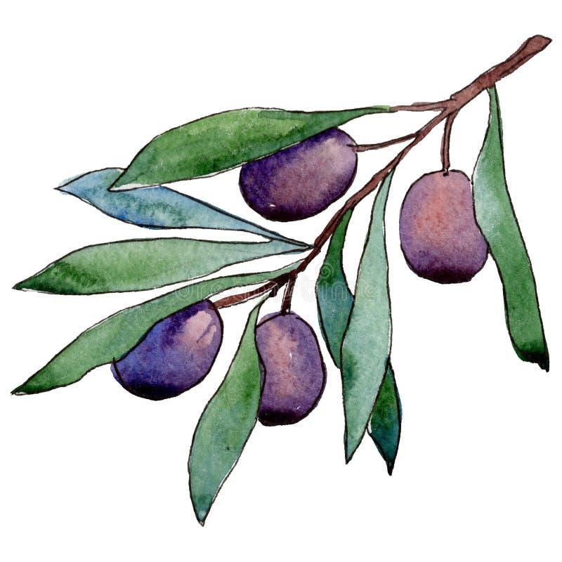 Download Drzewo Oliwne W Akwarela Stylu Odizolowywającym Ilustracji - Ilustracja złożonej z sylwetka, sezonowy: 106923632