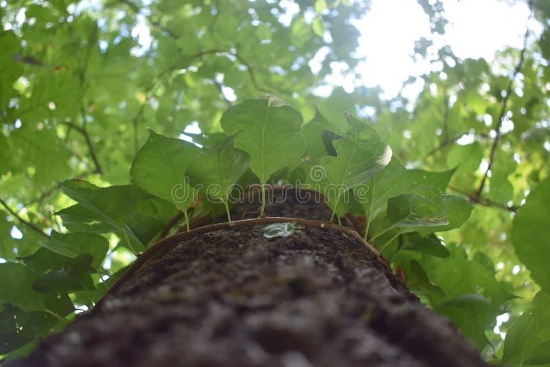 Drzewo owinięte liśćmi zdjęcie stock