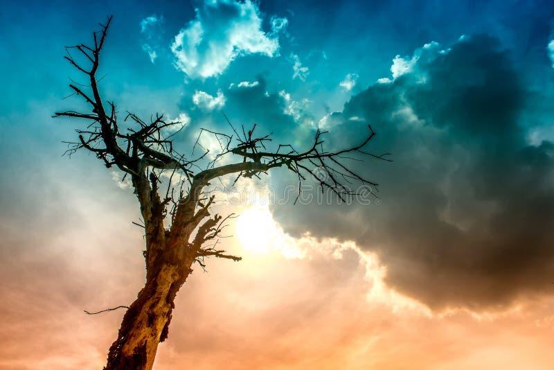 Drzewo palący błyskawicą zdjęcie stock