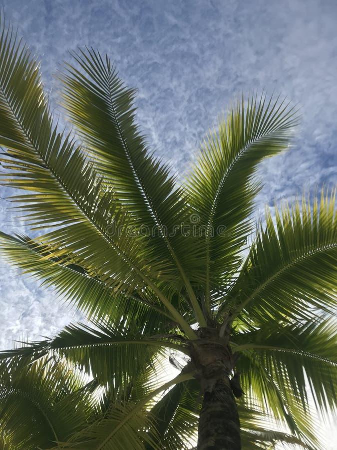 drzewo palm nieba fotografia stock