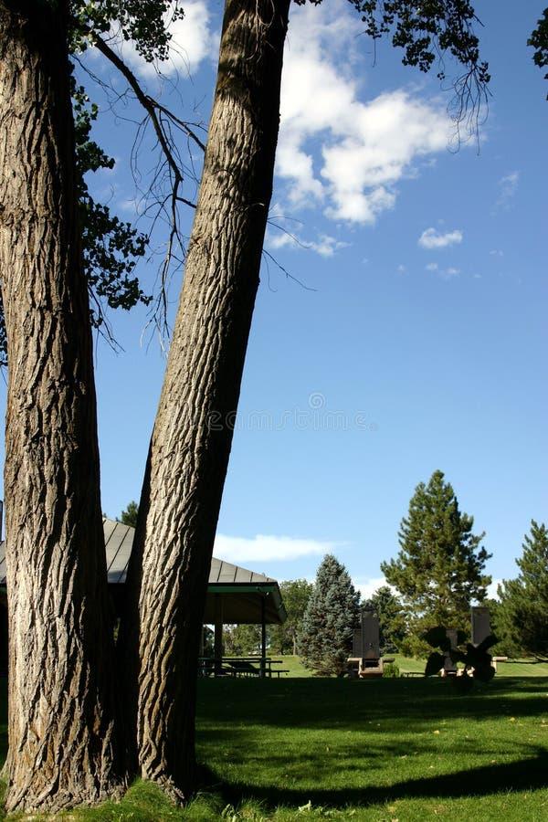 drzewo park obraz royalty free