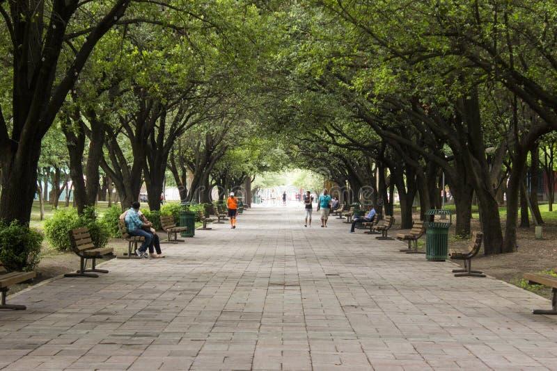 Drzewo parkowy korytarz z ludźmi chodzi publicznie ławki wzdłuż przejścia i siedzi obrazy royalty free