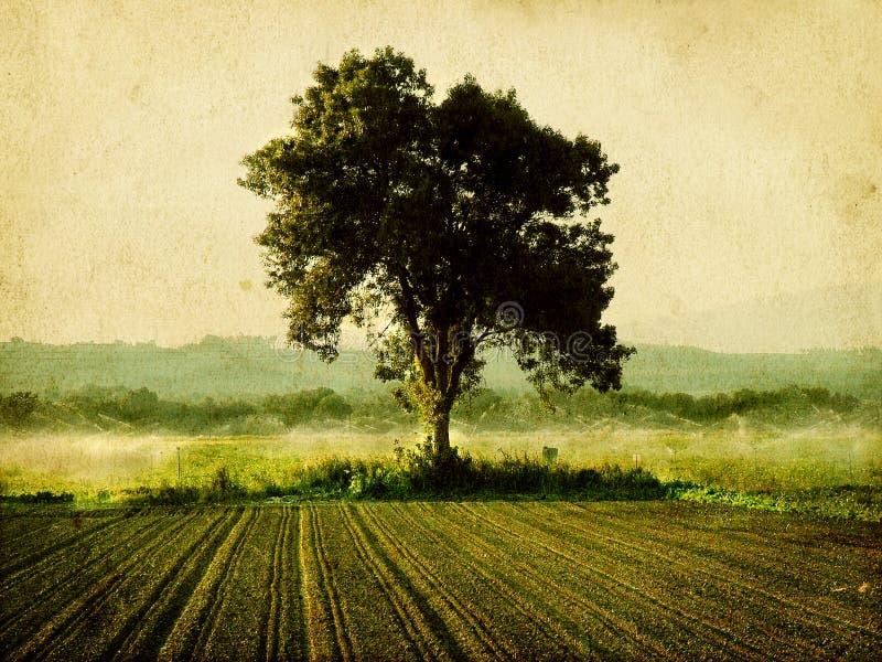 Drzewo po środku pola obraz stock
