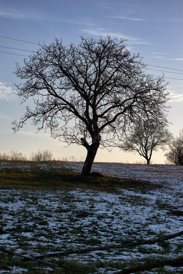 Drzewo po pierwszy roztapiającego śnieżnego spadku obrazy stock