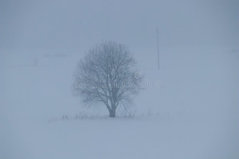 Drzewo podczas opad śniegu fotografia stock