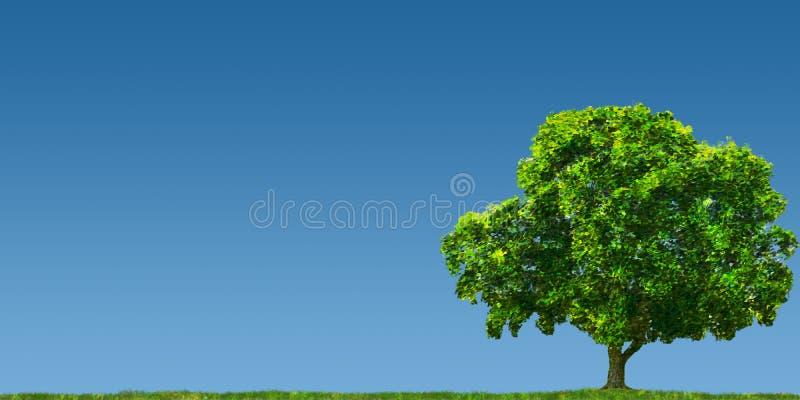 drzewo pola ilustracji