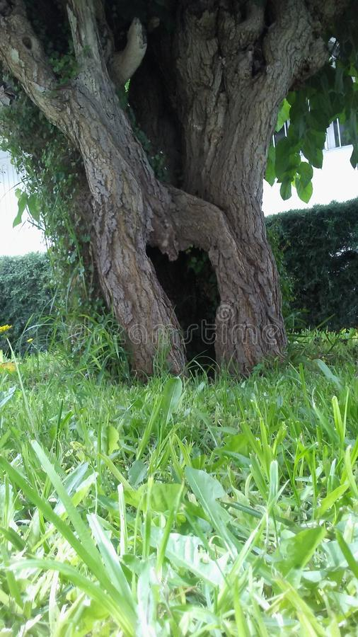Drzewo prawdziwy obraz royalty free