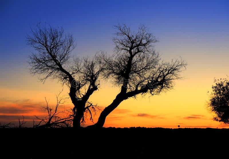 Drzewo przeciw światłu słonecznemu nad niebem zdjęcia stock