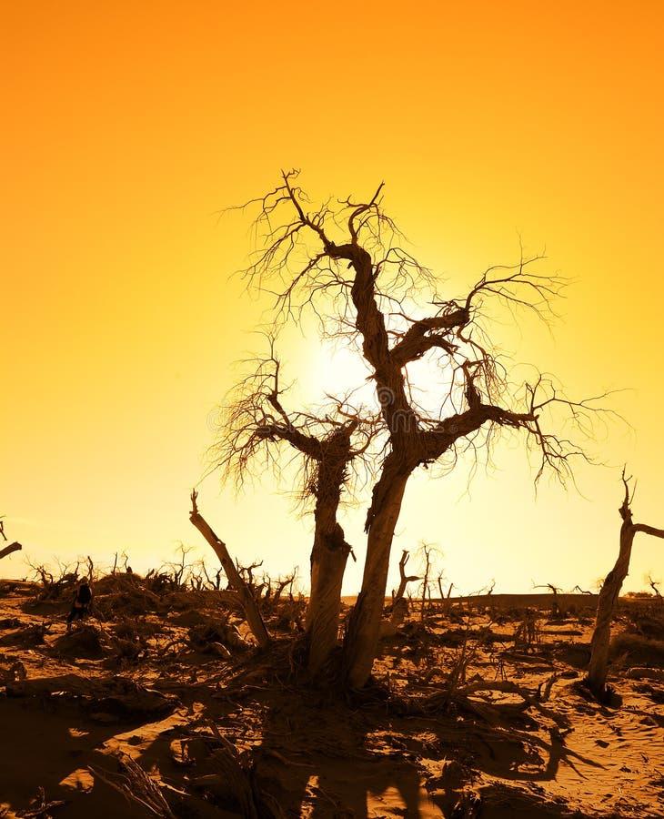 Drzewo przeciw światłu słonecznemu nad niebem zdjęcia royalty free