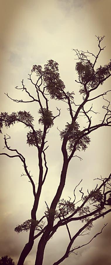 Drzewo przeciw niebo czarny i biały fotografii obraz stock