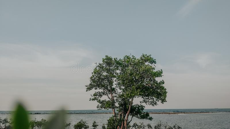 drzewo przy plaży i zachodzie słońca zdjęcia royalty free