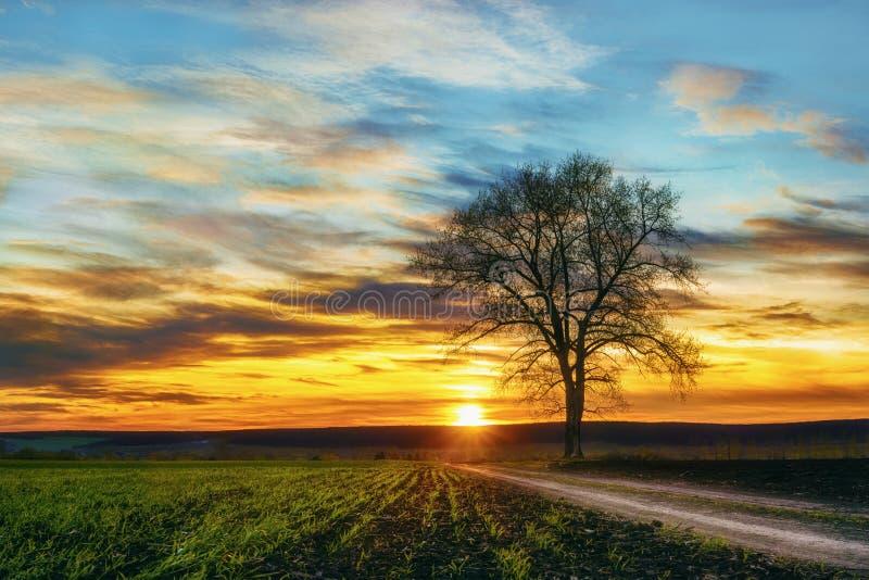 Drzewo przy zmierzchem zdjęcie royalty free