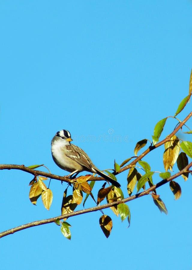 drzewo ptaka obrazy royalty free