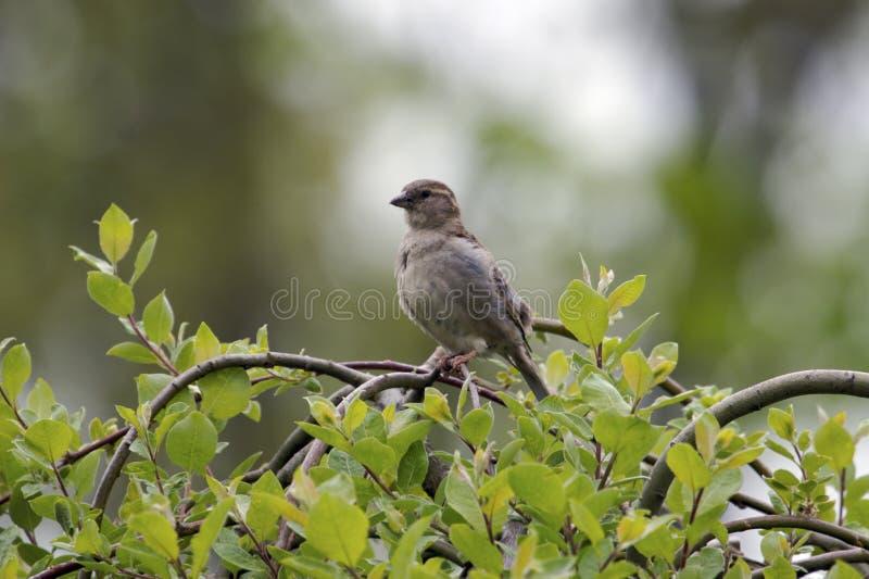 drzewo ptaka fotografia stock