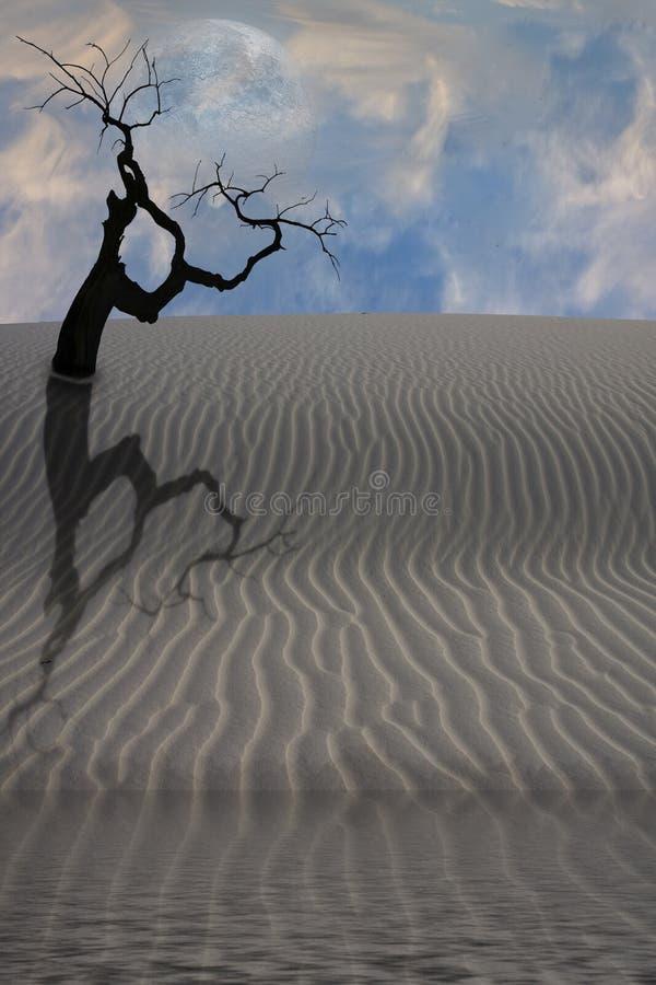 drzewo pustynna woda obraz royalty free