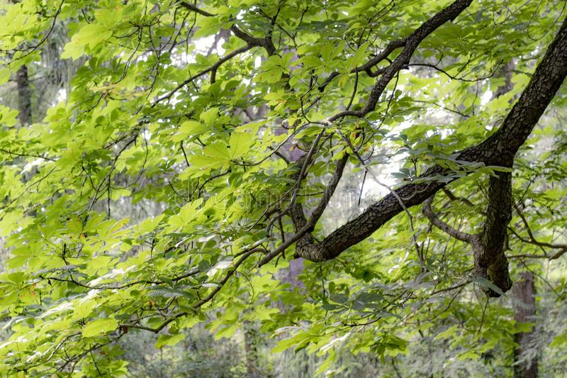 drzewo rosnące zdjęcie stock